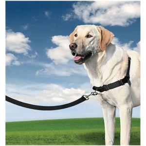 Correas, arneses y collares para perros