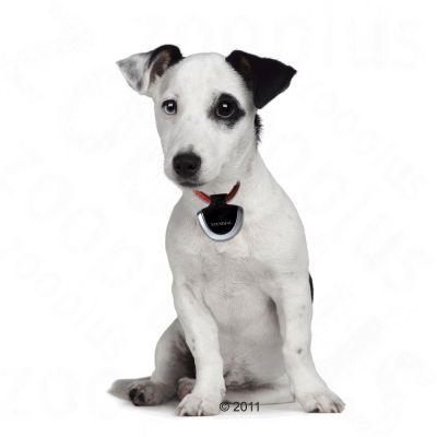 Cámara de vídeo Eyenimal para mascotas