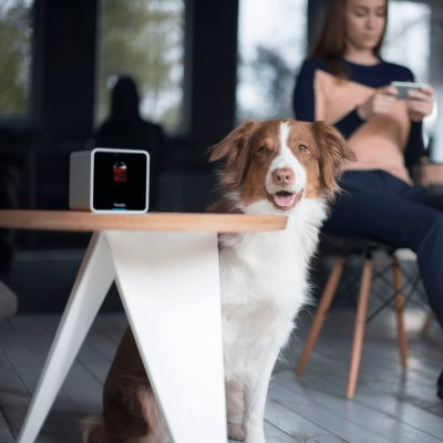 Cámara de vigilancia interactiva Petcube para mascotas