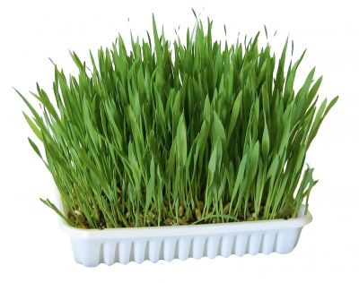 Herbe pour rongeur zooplus - Herbe a chat entretien ...