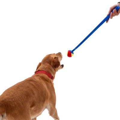 Lanceur de balles de tennis pour chien