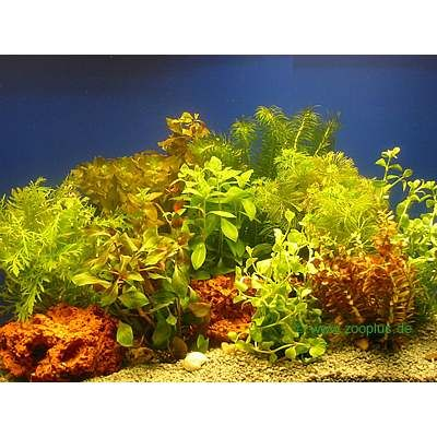 Lot de plantes color es pour aquarium prix avantageux for Aquarium en solde
