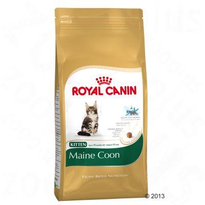 Royal Canin Kattenvoer - Maine Coon Kitten